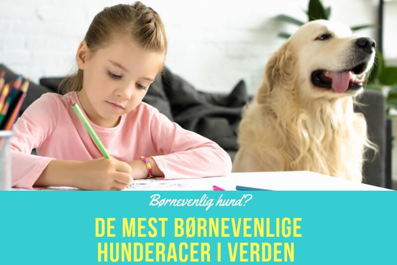 De mest børnevenlige hunderacer i verden